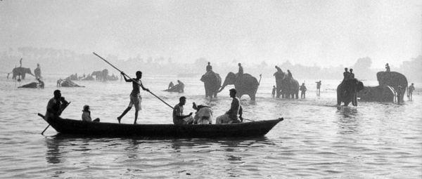 Bain des éléphants dans le Gange, Inde, 1956