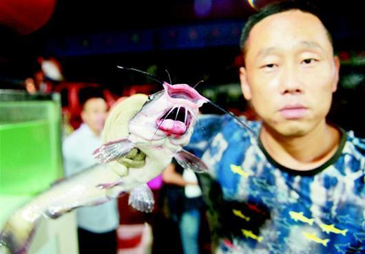 """楚天都市报讯 楚天都市报讯 (记者满达 王永胜)""""这条鮰鱼竟长了两张嘴,卖了20多年鱼还是头一次见。""""昨日,在白沙洲大市场开鱼行的朱先生,抓着一条从洪湖拉来的怪鱼十分惊讶。"""