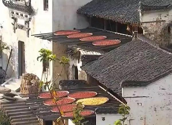 在婺源篁岭景区,大批浙江游客来到这里了解具有丰厚底蕴的徽文化,欣赏晒秋、梯田、徽派建筑等经典美景。