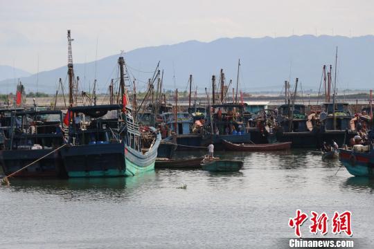 """潮州三百门港渔船回港,防御台风""""莫兰蒂""""。 余秋松 摄"""