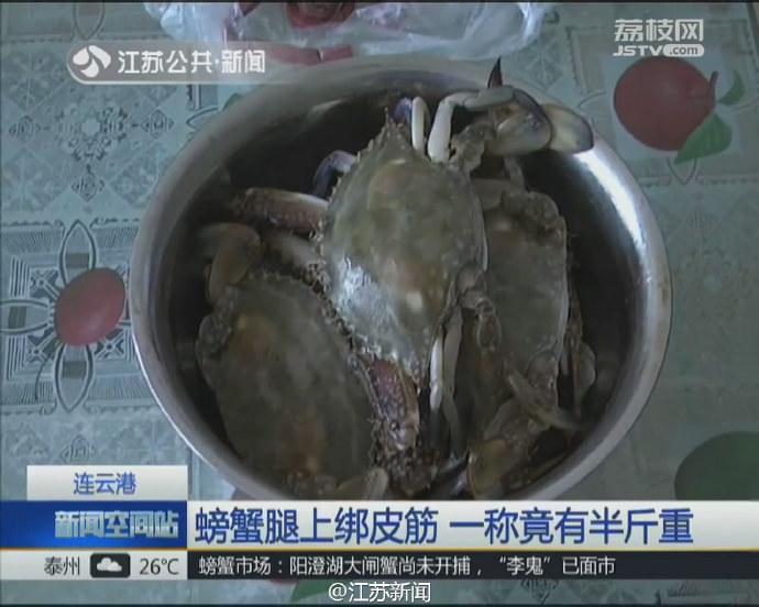 近日,连云港的李女士买了五只螃蟹,45元一斤。回家后,李女士从螃蟹腿上拆下的皮筋竟有半斤重。折算下来,皮筋就值25元。