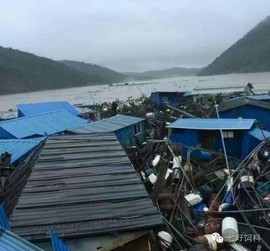 7月20日起,长江干流宜昌段以下渔政部门陆续接到来自渔民的外来鲟鱼捕捞记录。7月26日-8月2日,仅在洪湖螺山、嘉鱼等地就有100余尾外来鲟鱼被捕捞到。