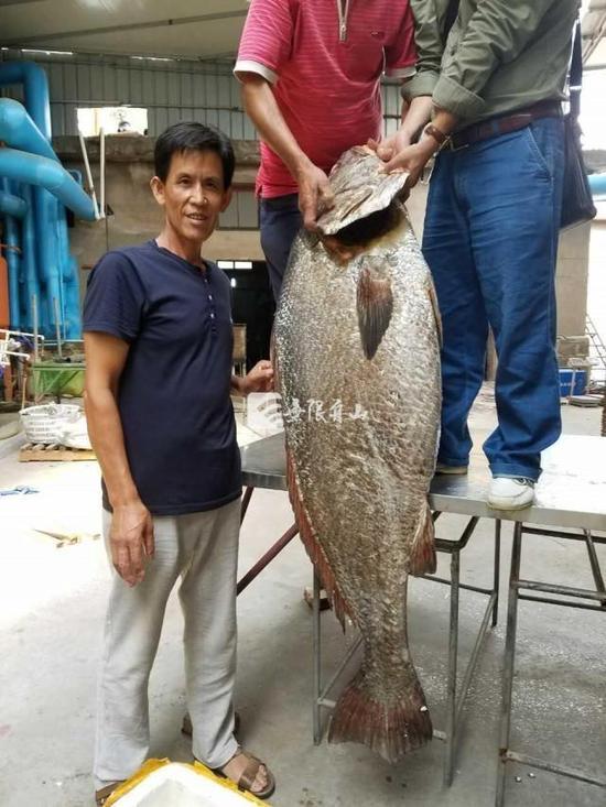 这条大鱼足有一人高。来历:有限舟山