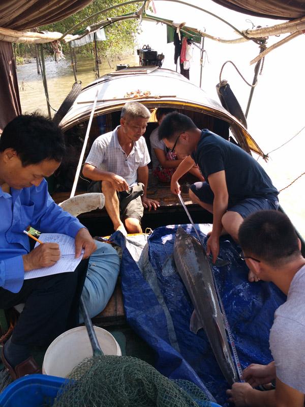 国家水产科学研讨院长江水产研讨所科研职员在长江中游发展逃逸个别监测。农业部长江办供图
