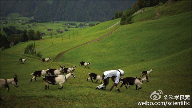 他说,我一直幻想着, 我就是一只羊,他演讲完,像山羊一样爬着就下去了......
