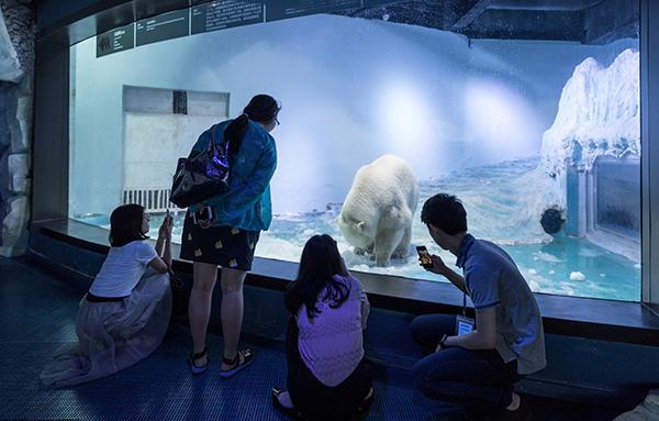 """正佳极地海洋世界内,众多游客前来观赏""""最悲伤的北极熊""""披萨。 视觉中国 图"""