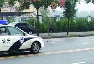 警车在鸵鸟身后一路跟随 网友供图,请联系我们领稿费