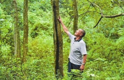 9月15日,66岁叙永老人爬天梯30年种树,500亩荒山变绿林。