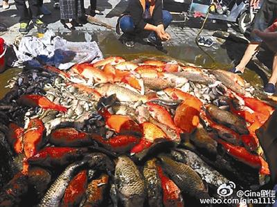 公园鱼遭狂捞售卖 暗藏食用隐患