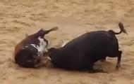 两斗牛高速对撞瞬间双亡