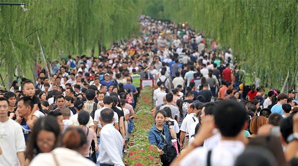 2016年10月2日,浙江杭州,西湖景区呈现爆棚模式。 视觉中国 图