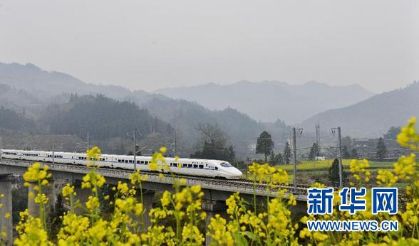 2015年1月20日,一列贵广高铁动车经过贵州省榕江县境内的一片盛开的油菜花。 新华社发(王炳真)