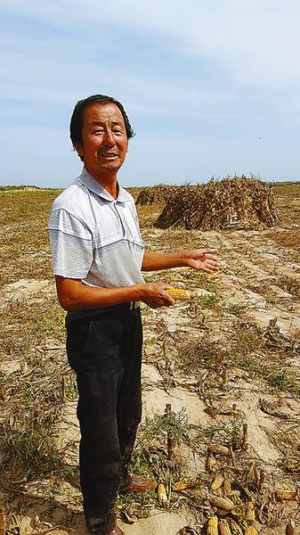 在铲倒的70亩地里,陈兆文老人一脸苦愁。