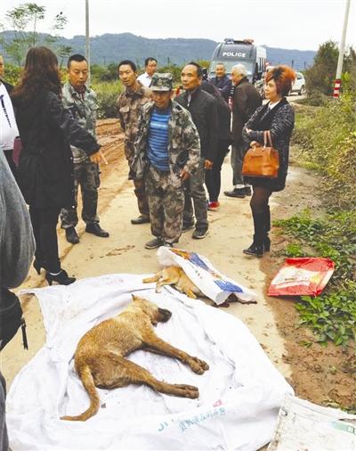 11日,被捕杀的疑似漂泊狗,经伤者现场指认称,脖子上拴了一根绳索阆中市公安局供图