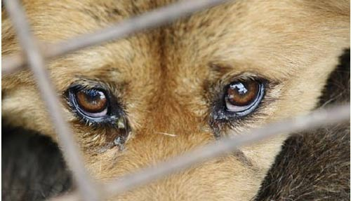 至今没有制定一部《动物保护法》或《防止虐待动物法