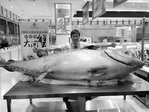 原标题:温州现巨型蓝鳍金枪鱼 最贵一块鱼肉要3800元一两