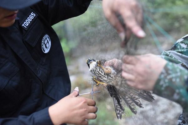 10月17日,浙江省嘉兴市海盐县,执法人员和志愿者一人安抚这些受惊的鸟,一人细心找线,剪断,解开。