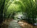 紫竹院公园 不止有竹子