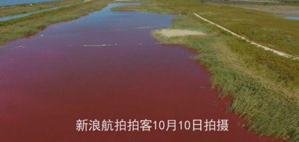 据爆料,大连市金州区西海湾湿地水体从9月20起开始泛红,至今已有一月。