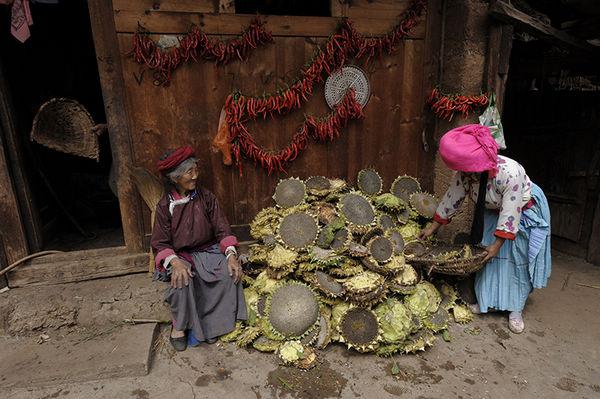 2011年9月,云南省泸沽湖,纳西族村民在晾晒向日葵。王文澜 摄