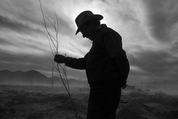 一直坚持种树的老人,他的身影一直陪伴着这片沙地 王伟涛 摄