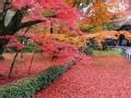 京城红叶藏宝图