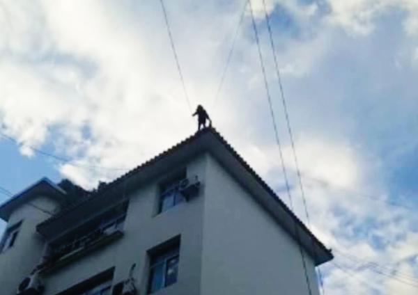 女生从学校附近的一栋楼楼顶坠下之前。