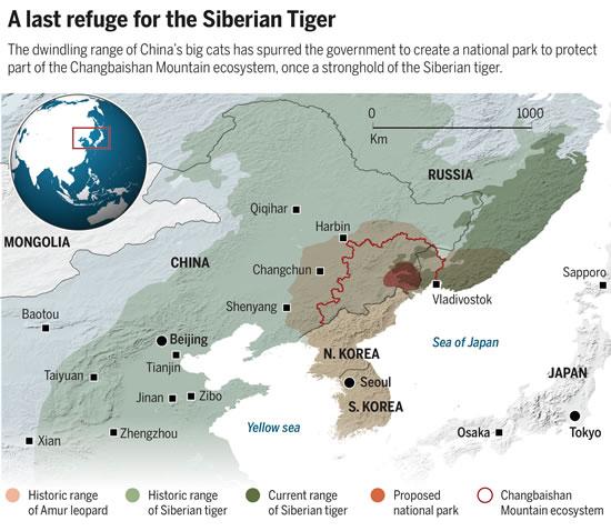 """目前体重能达到300公斤、世界上最大的猫科动物东北虎,以及东北豹面临着非法盗猎、森林采伐和人类经济发展的多重威胁。""""消除这些威胁因素,这个国家公园很可能成为未来十年或二十年内最成功的老虎保护案例"""",世界上著名的东北虎研究专家和世界野生动物保护协会俄罗斯办公室主任Dale Miquelle说道。"""