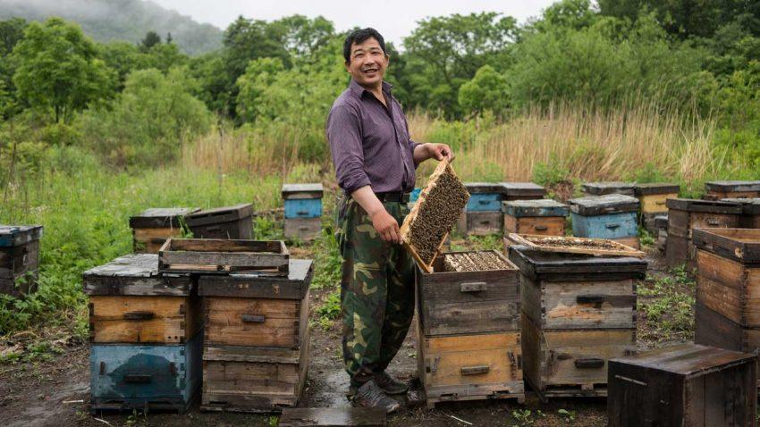 改行养蜂的伐木工