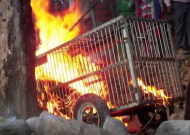2016年11月6日报道,印度古吉拉特邦一�b花豹上周三咬死当地一名8岁女童,惹起民愤。居民其后放火,把花豹活活烧死。花豹被烧焦,全身发黑。