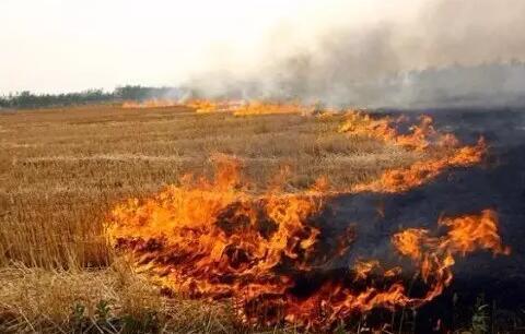 目前,秸秆焚烧已成为影响东北地区秋冬环境空气质量的主要因素之一。