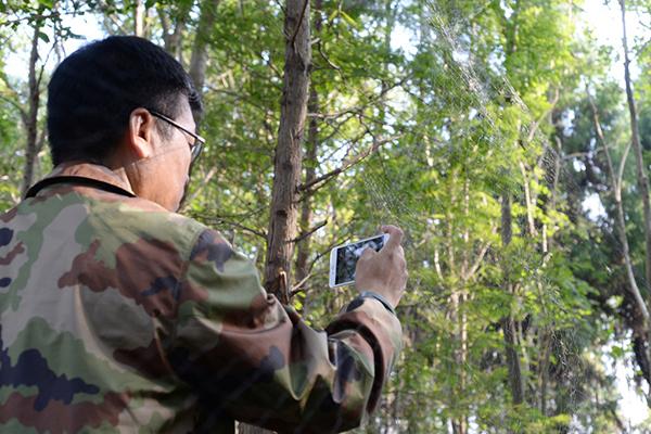 上海崇明岛向化镇一林地,志愿者曹成杰在拍摄一处布在树林中的鸟网。
