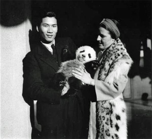 """1937年,她以8750美元的价格把""""苏琳""""卖给了芝加哥布鲁克菲尔德动物园,然后用这笔钱再次从中国捕猎者手里买了一只名为""""梅梅""""(Mei-Mei)的大熊猫。"""