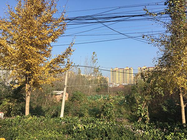 """如今,罗山县天湖古酒酿造有限公司厂区前的这块地,县里将用来建小学。王韬质疑,这块地被""""一女二嫁""""。"""
