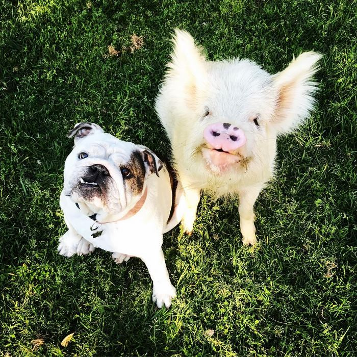 最初家人们都担心Olive会如何与斗牛犬Lola相处,但很快他们发现这种担心是多余的,Olive和Lola成为了最好的朋友。