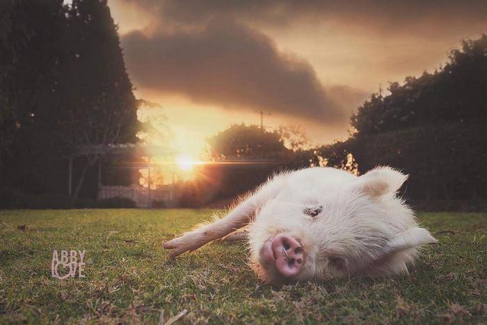 Olive超享受的躺在草地上。