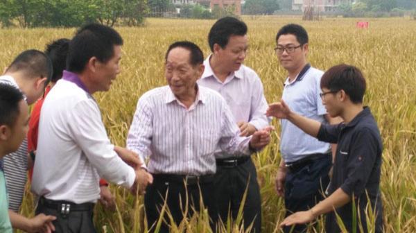 袁隆平、罗锡文,以及相关技术专家、测产验收专家对华南双季稻年亩产三千斤绿色高效模式攻关项目进行测产验收。 南方网 图