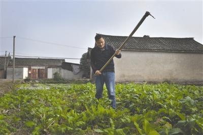 11月18日,大邑县新场镇,邵传远扛起锄头下地种菜