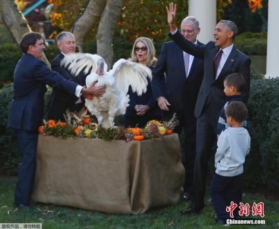 当地时间2016年11月23日,美国华盛顿,感恩节将至,美国总统奥巴马在白宫举行仪式,赦免本年度国家感恩节火鸡。