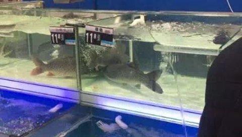 """当一些超市的活鱼莫名其妙地消失了,当各种群体有着各种说法,当流言与疑窦齐飞,归根结底,还是一场没有安全感的心理演绎。这种没有安全感的""""空心""""状态,不只存在于消费者。"""