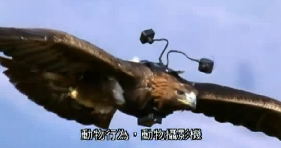 还有放置隐藏摄影头、人走近动物这些最基本的,岩石摄像头: