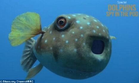 眼睛或身体装有摄像机,跟在别人后面游来游去,然后偷拍。
