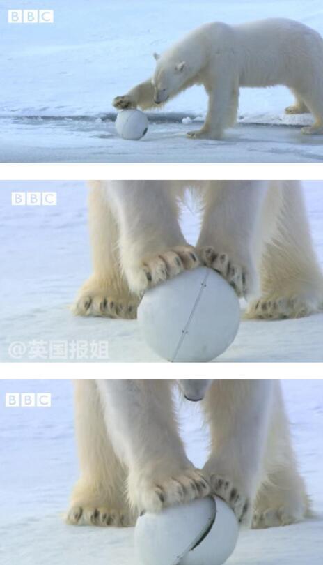 而最让人忍俊不禁的是,拍摄人员用间谍企鹅以假乱真,结果竟然引出一场出轨戏码。