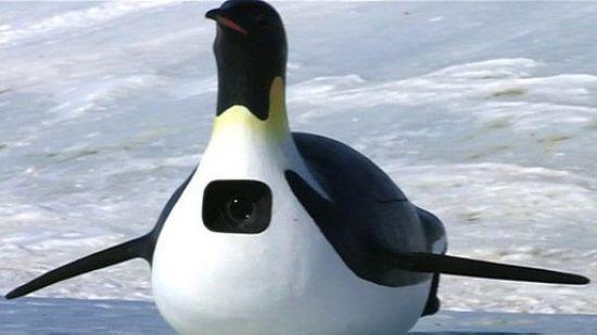 还被一群企鹅当成领头的,跟在后面走……