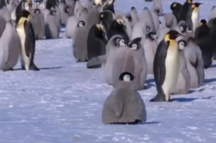 热播纪录片《Planet Earth》背后:BBC的伪装摄像头如何以假乱真