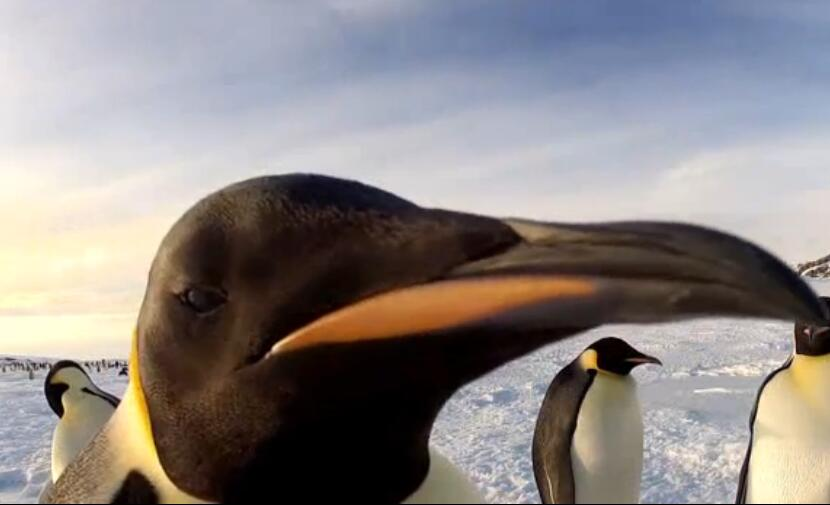 """因为""""间谍企鹅""""做的太过逼真,还额外生出了多余的戏码:"""
