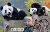 来啊!大熊猫要越狱啦