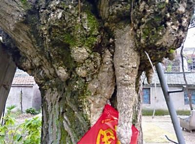 右边树干上的图画,像极了一张人脸。(市民戚密斯供图)
