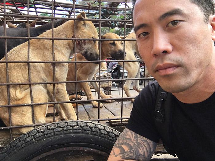 Marc还承认他雇了一些当地人扮成抢狗的暴徒,半夜闯进南宁福利站,抓走了100多只已经定好要送到外国寄养家庭的狗。