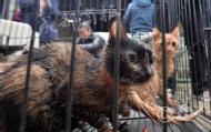 伪爱猫人士日杀百猫当兔肉卖